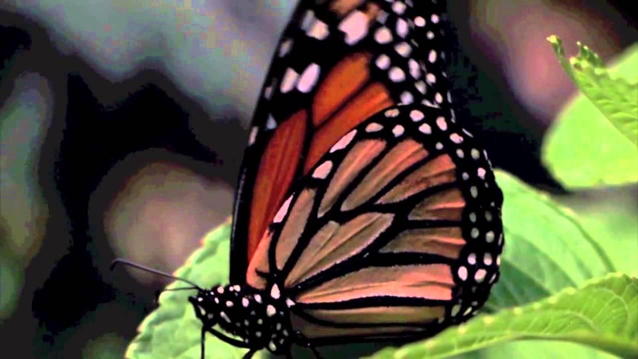 faac-instinct-of-movement-seasons-greetings-video-1280x720